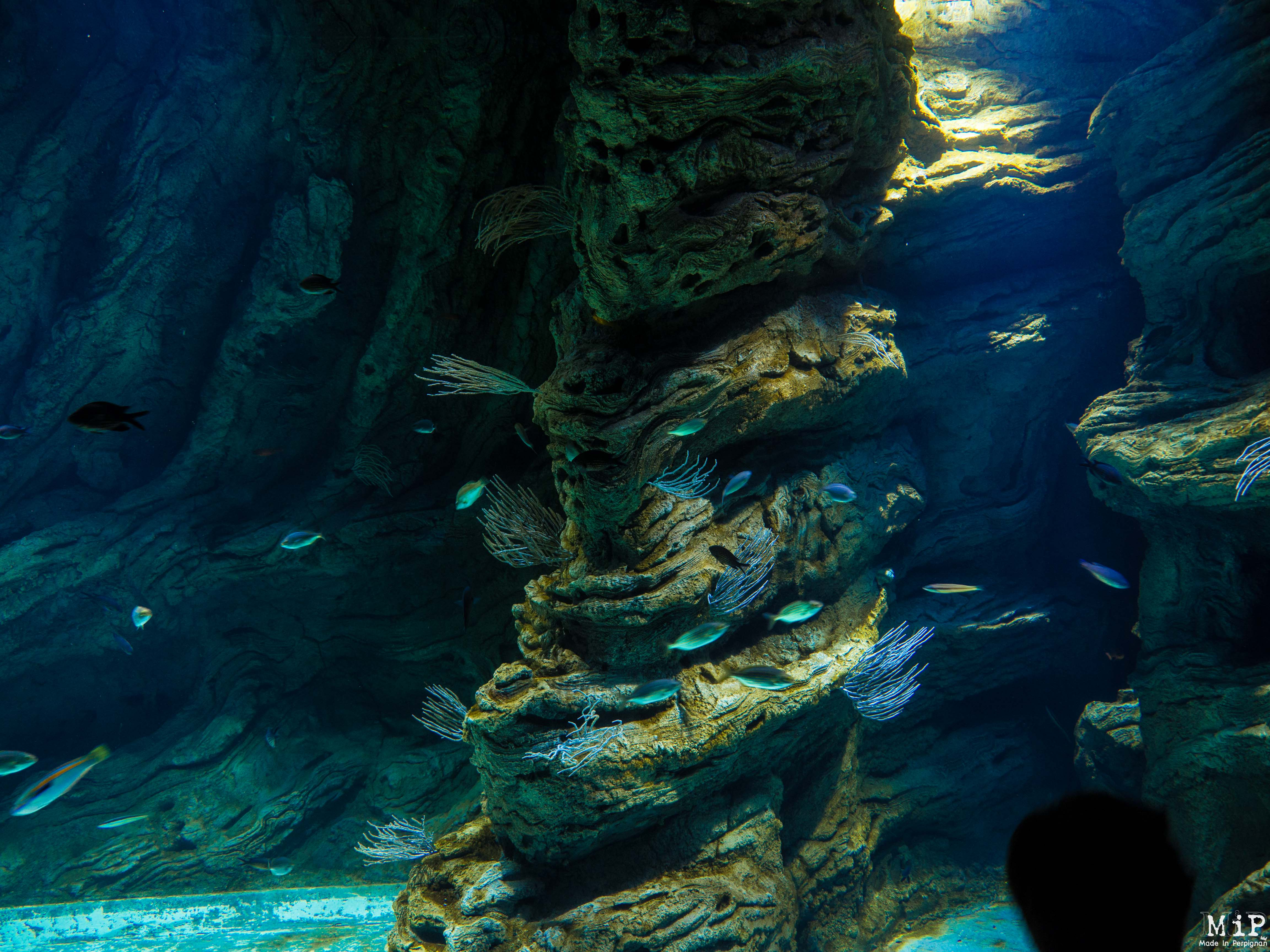 vid 233 o aquarium de banyuls sur mer bien plus qu un 171 zoo 224 poissons 187 made in perpignan