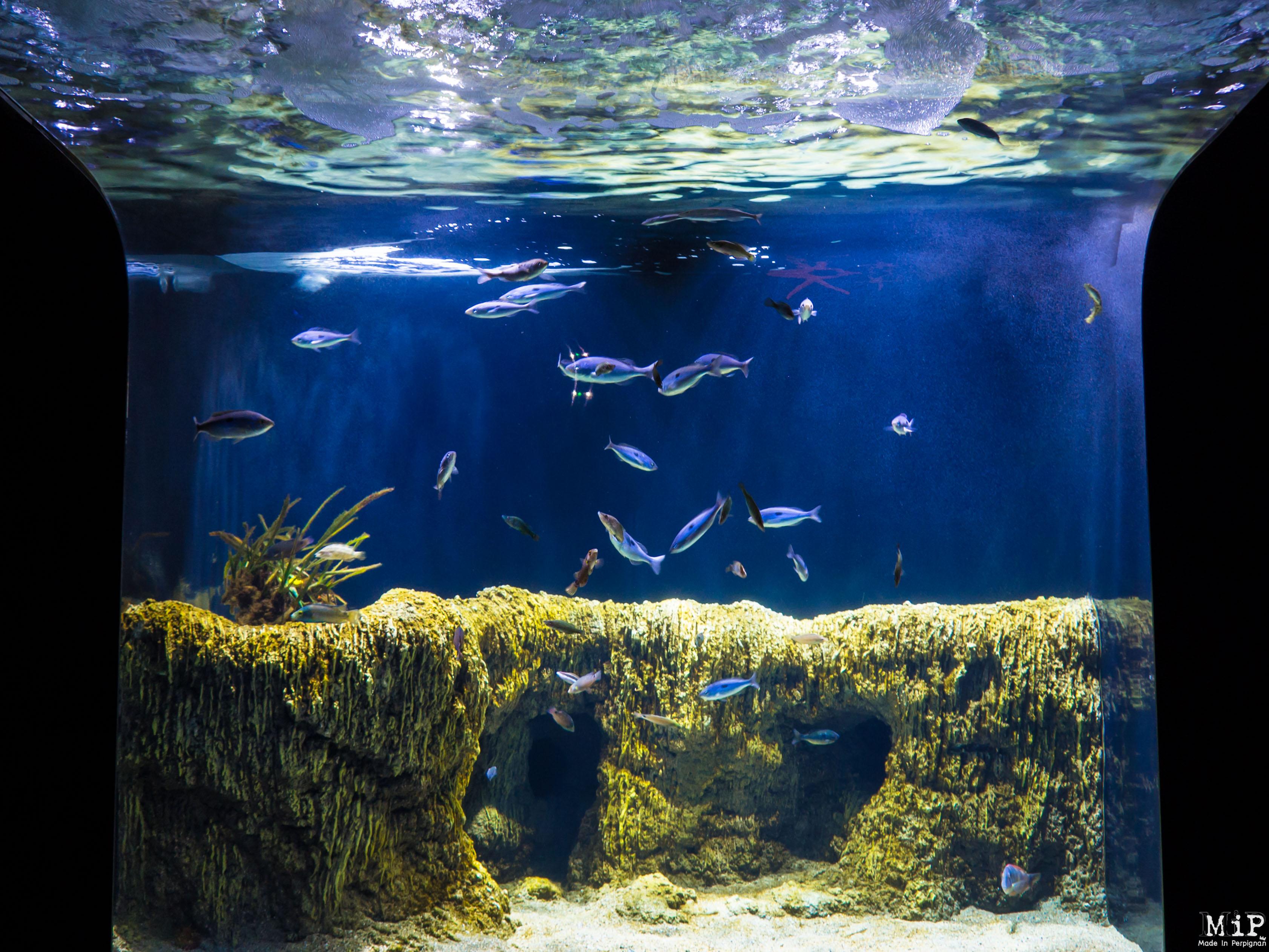 aquarium de banyuls sur mer 6290487 made in perpignan