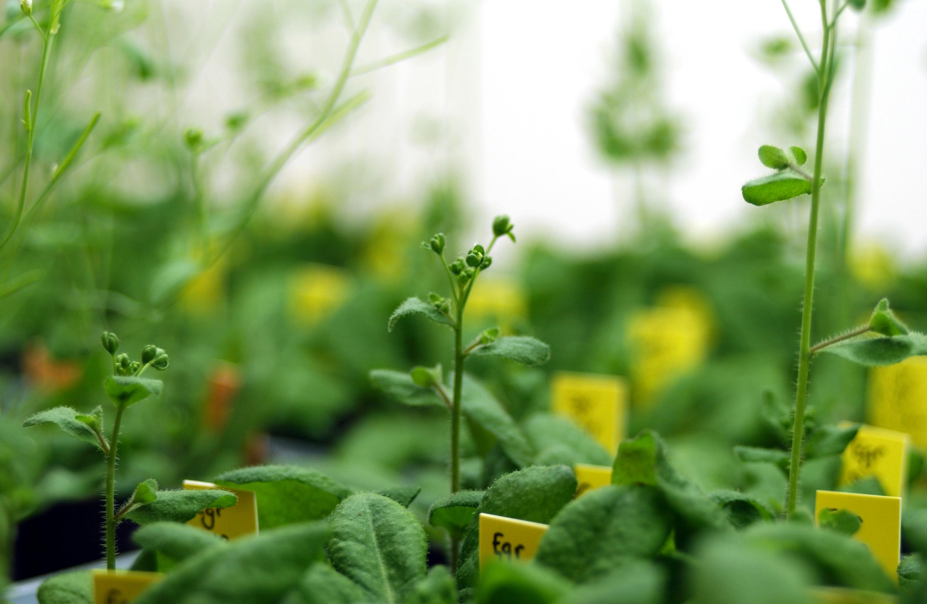 michel delseny la recherche sur le g nome des plantes